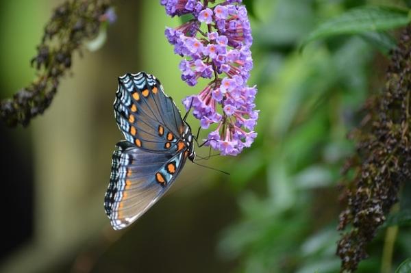 W poszukiwaniu kwiatów i motyli