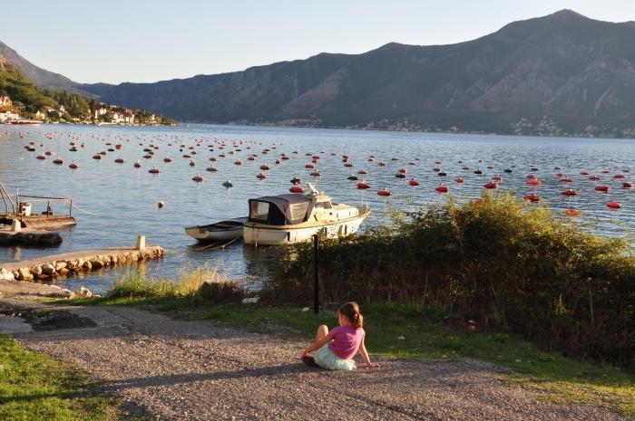 Widok na Zatokę Kotorską i hodowlę małży.
