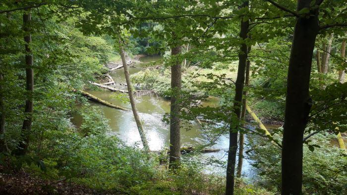 Malownicza rzeka Drawa - Drawieński Park Narodowy