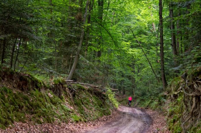Lessowy wąwóz w Lesie Cetnar pomiędzy Kawęczynkiem a Szczebrzeszynem
