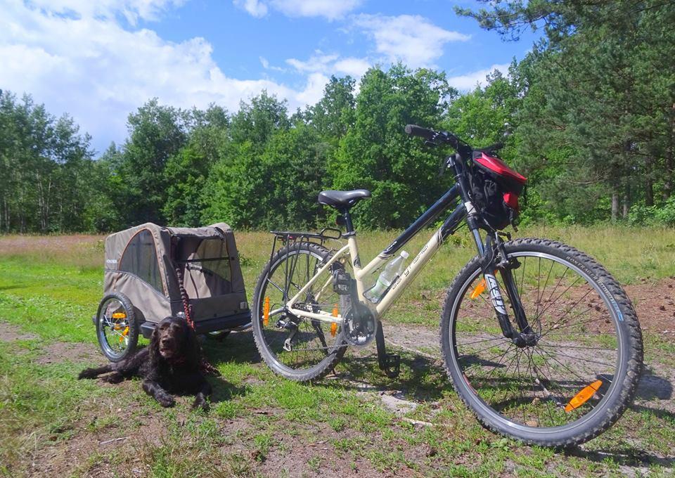 Przyczepka rowerowa dla psa Croozer Dog - wypożyczalnia